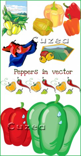 Peppers in vector