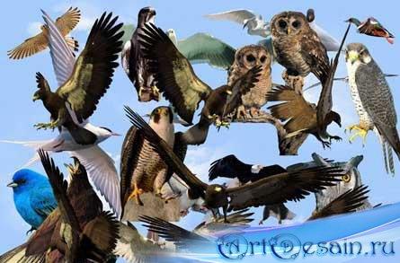 Растровый Клипарт Птицы