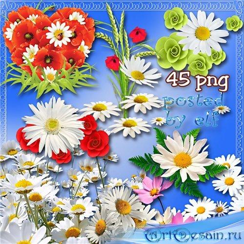 Клипарт - Полевой цветочек–милая ромашка
