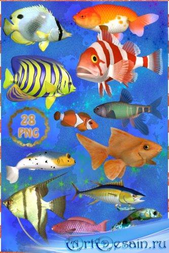 Клипарт PNG - Аквариумные рыбки