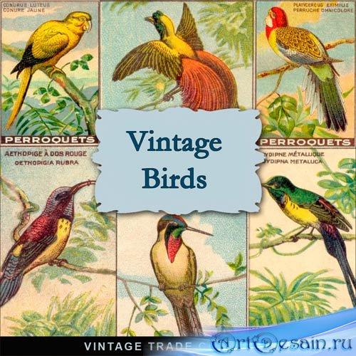Фоны для фотошопа - Винтажные птицы