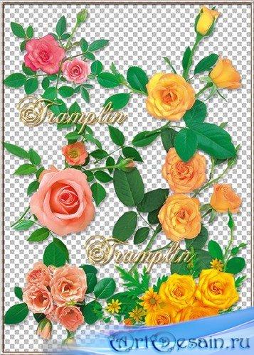 Клипарт на прозрачном фоне – Эти  Розы нежные
