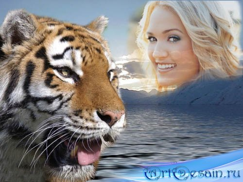 Рамка с животными - красивый тигр