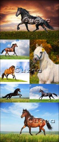 Лошади на фоне природы - Stock photo