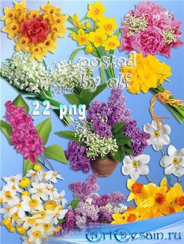 Нарциссы, ландыши, сирень - весенние цветы на прозрачном фоне