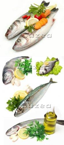 Свежая рыба и зелень на белом фоне| Fresh fish and greens on a white backgr ...