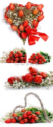 Stock photo - Композиция из красных тюльпанов/  Red tulips heart