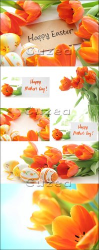 Stock photo - Тюльпаны к 8 марта и к пасхе/ Tulips for Mother day and Easter eggs