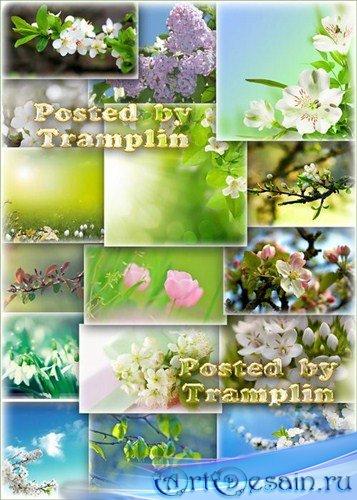 Клипарт фоны – Весеннее цветение
