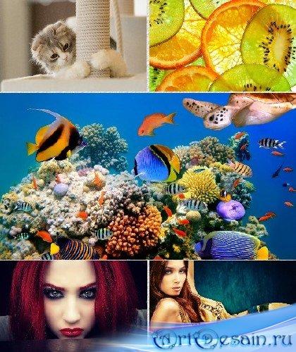 Обои - Коллекция прекрасных изображений к Вашему монитору