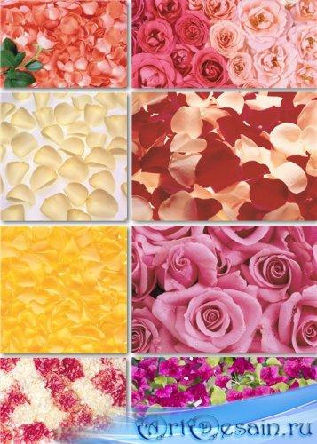 Растровые цветочные фоны