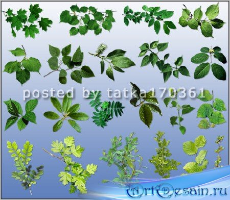 Клипарт для фотошопа на прозрачном фоне - Ветки разных деревьев