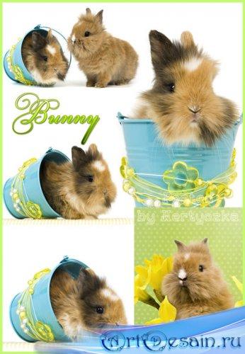 Забавные кролики - растровый клипарт к празднику пасха