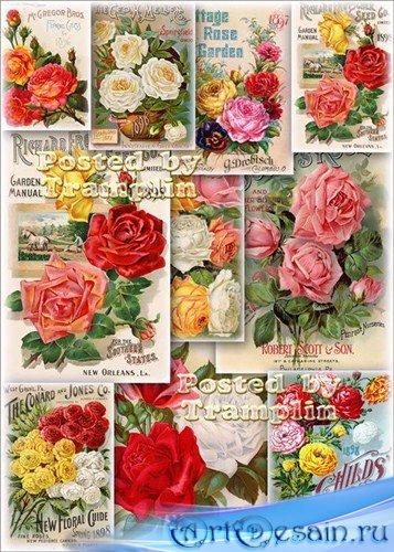 Картинки для декупажа - Винтажные букеты из роз