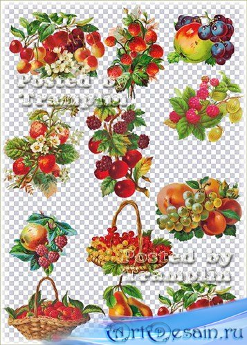 Винтажные фрукты на прозрачном фоне – Виноград, яблоки, клубника, персики,  ...