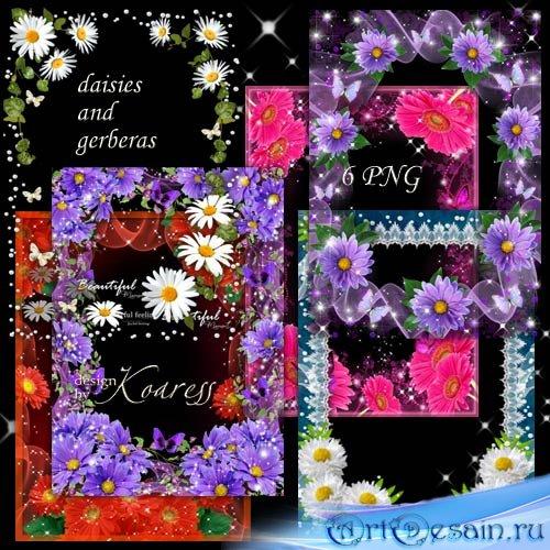 Набор цветочных рамок для фотошопа - Ромашки и герберы