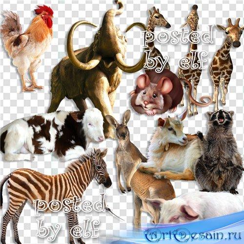 Клипарт на прозрачном фоне - Домашние и дикие животные