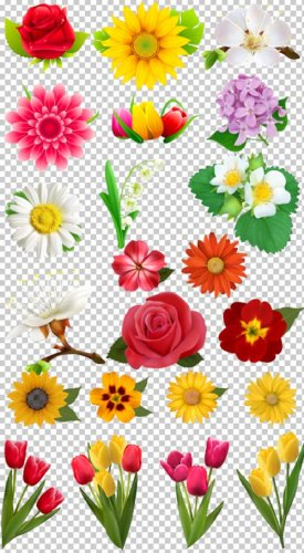 Клипарт подборка цветов на прозрачном фоне