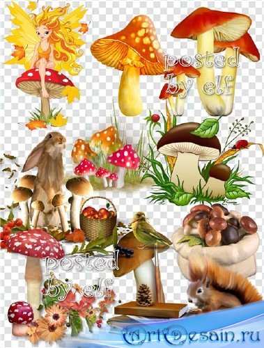 Грибы и грибочки в PNG