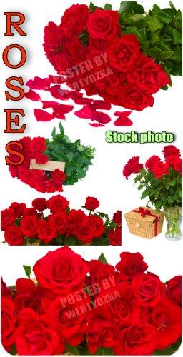 Розы, букеты роз, цветы / Roses, bouquets of roses, flowers - Raster clipar ...