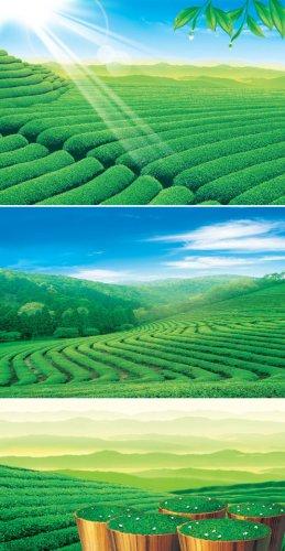 PSD-исходники - Зеленый Чай
