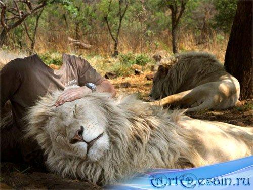 Шаблон для фото - Фото со львами в Саванне