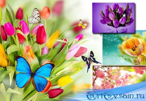 Клипарт для фотошопа - Весенние цветы