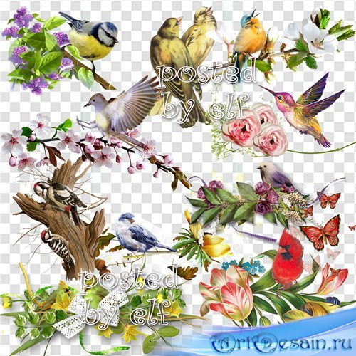 Клипарт в png - Птицы и птички