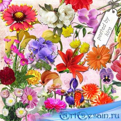 Клипарт в png   - Пионы, георгины, анютины глазки и другие садовые цветы на ...