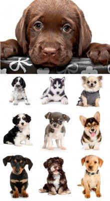 Милые и симпатичные собаки - растровый клипарт