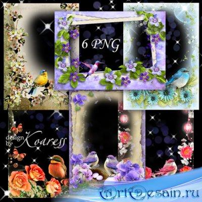 Набор романтических png рамок для фотошопа с птичками - Птичье пение в день ...