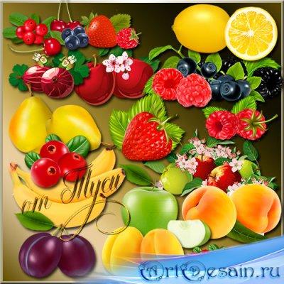 Клипарт - Ягоды и фрукты