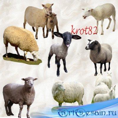 Клипарт – Овечки, козы, барашки, ягнята