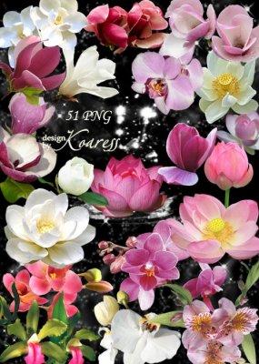 Png клипарт с экзотическими южными цветами - Лотосы, водяные лилии, орхидеи