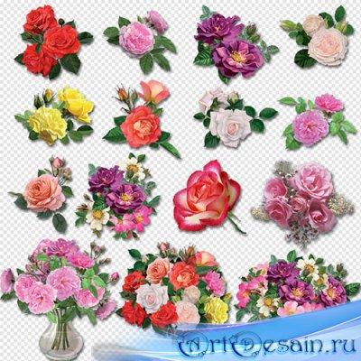 Клипарт- розы разных сортов и разного цвета на прозрачном фоне