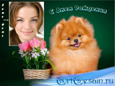 Рамка для фотошопа - Милая собачка с букетом цветов