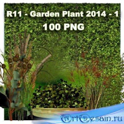 Клипарт PNG - Садовые растения