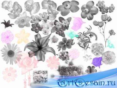 Набор кистей для Фотошопа - Цветы
