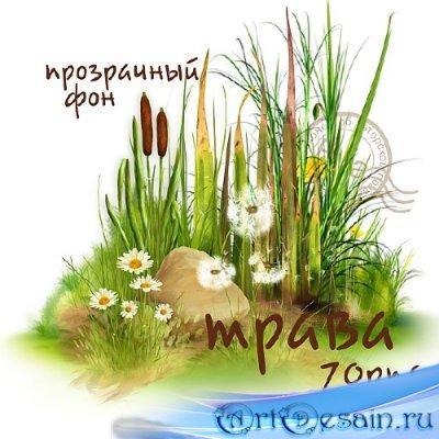Клипарт - Трава