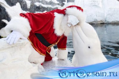 Шаблон для фото - В костюме деда мороза с белым дельфином