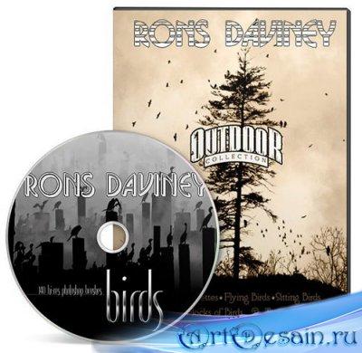 Rons Daviney Birds - Кисти для фотошоп
