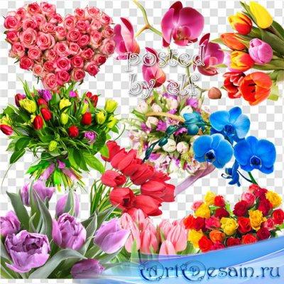 Клипарт без фона - Розы, орхидеи, тюльпаны