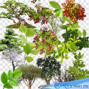 Клипарт (png) - Зелень, ветки, деревья