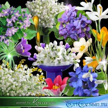 Весенние цветы на прозрачном фоне - фиалки, подснежники, ландыши, крокусы,  ...