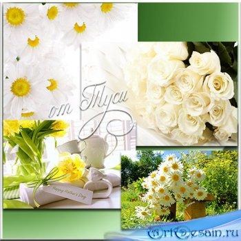 Дивные цветы – нежный цвет живой красоты - Клипарт
