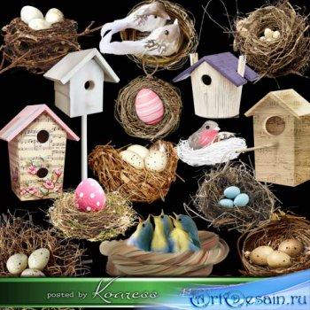 Клипарт на прозрачном фоне - Птицы, гнезда, скворечники