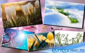 Клипарт фото - Цветы весной