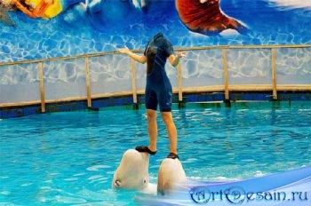 На двух дельфинах - Photoshop шаблон