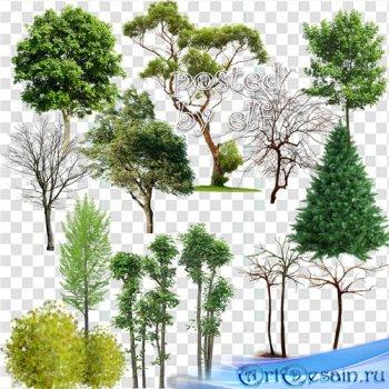 Клипарт в png формате - Деревья