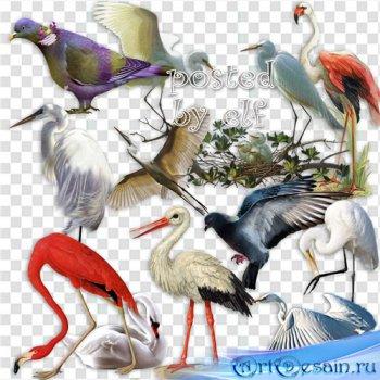 Аисты, цапли, фламинго, лебеди и голуби - клипарт без фона